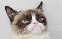 Grumpy Cat. Фото с ее страницы в Facebook