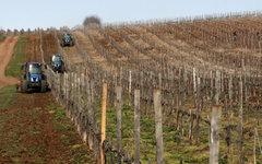 Виноградники в селе Каштаны Бахчисарайского района в Крыму © РИА Новости, Тарас