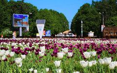 Фото с сайта park.sokolniki.com