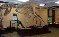 Скелет тарбозавра. Фото Hiuppo с сайта wikimedia.org