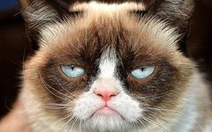 Tardar Sauce. Фото с официальной страницы Grumpy Cat