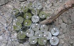 Противопехотные мины. Фото с сайта topwar.ru