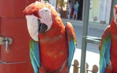 Конфискованный попугай. Фото с сайта anapa-prokuratura.ru