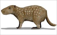 Josephoartigasia monesi. Фото Nobu Tamura с сайта wikimedia.org