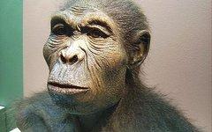 Человек умелый (Homo habilis). Фото с сайта wikimedia.org
