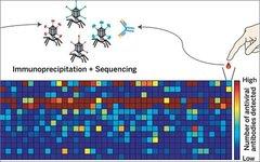 Изображение с сайта sciencemag.org