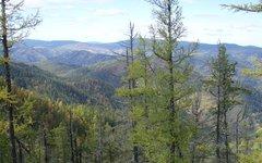 Тайга. Фото Elkwiki с сайта wikimedia.org