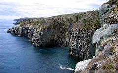 Ньюфаундленд. Фото с сайта wikimedia.org
