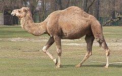 Фото Agadez с сайта wikimedia.org