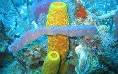 Фото: NOAA Photo Library