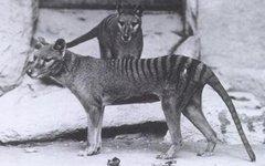 В Австралии обнаружили вымершее      животное