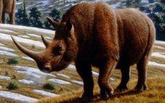 Шерстистый носорог. Фото Mauricio Antón с сайта wikimedia.org