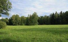 Пейзаж Ленинградской области. Фото с сайта wikimedia.org