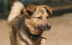 Собака из питомника