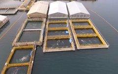 Китовая тюрьма в Приморье