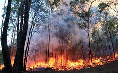 © KM.RU, Противопожарная служба Нового Южного Уэльса