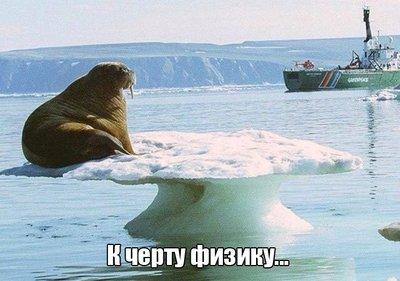 morj_fotopodborka_ponedelnika_50_foto_6.