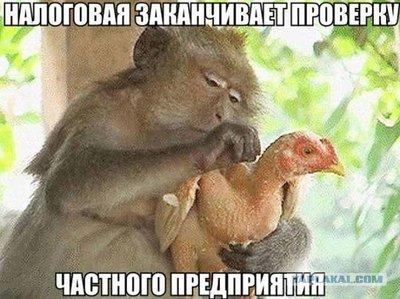 http://ic1.static.km.ru/sites/default/files/imagecache/400x400/nalogovaja.jpg