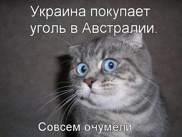 Россияне почувствовали ухудшение экономической ситуации в стране из-за санкций, - опрос - Цензор.НЕТ 729