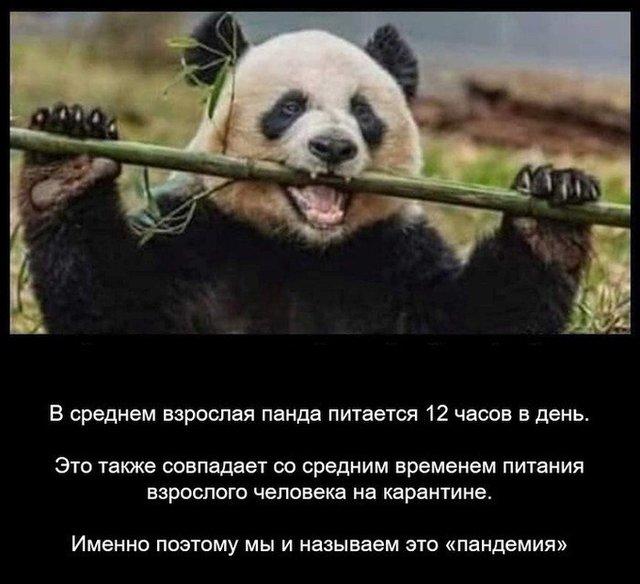 Pandemija nuo pandos maitinimosi būdo....