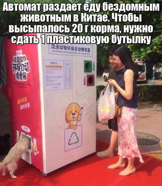 Kinijoj automatas išduoda maistą benamiams gyvūnams pridavus vieną butelį...