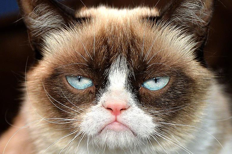 http://ic1.static.km.ru/sites/default/files/img/news/2014/7/3/grumpy-cat-14.jpg